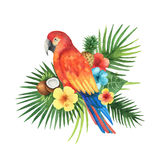 Watercolor bouquet of exotic leaves, parrots, flowers, coconut and pineapple. Stock Photos