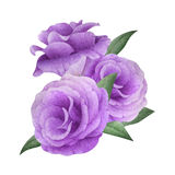 Watercolor bouquet of lisianthus Stock Photo