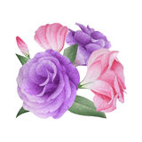 Watercolor bouquet of lisianthus Stock Photos