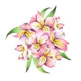 Watercolor bouquet of pink flowers with green leaves isolated on Royalty Free Stock Photography