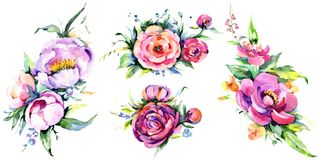 Watercolor bouquet pink peony flowes. Floral botanical flower. Isolated illustration element. royalty free illustration