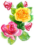Watercolor a bouquet from roses. On a white background Stock Photography