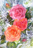 Watercolor bouquet of roz.Rozy, leaves, shoots.delicate flowers. shades of pink in the flowers Royalty Free Stock Photo