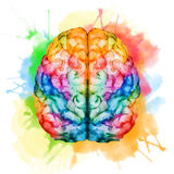 Watercolor brain Stock Photo