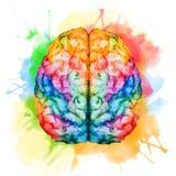 Watercolor brain Stock Photo