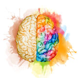 Watercolor brain. Beautiful vector image with nice watercolor brain stock illustration