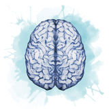 Watercolor brain Royalty Free Stock Photo