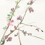 Watercolor branch with flowers Stock Photos