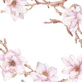 Watercolor branches of magnolia. Beautiful flowers over white Stock Image