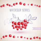 Watercolor branches rowan berry Royalty Free Stock Photos