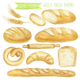 Watercolor Bread set. Hand drawn illustration. Watercolor Bread set.Different type of bread.Daily Fresh organic pastries products, loaf, bread, croissant vector illustration