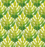 Watercolor breadfruit leaves pattern Stock Photography