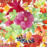 Watercolor briar flowers, berries and leaves seamless pattern. Stock Images