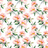 Watercolor briar flowers seamless pattern. Dog Rose branches Stock Photography
