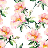 Watercolor briar flowers seamless pattern. Dog Rose branches Stock Photos