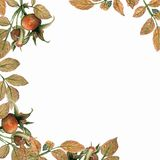 Watercolor brier card. Dog Rose branches and leaves frame on white background. Hand painted illustration with paper texture royalty free illustration