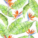 Watercolor Tropical Flowers and Leaves stock illustration