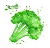 Watercolor broccoli Royalty Free Stock Image