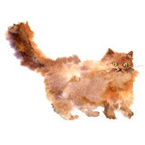 Watercolor brown fluffy cat Stock Image
