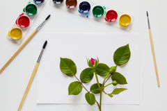 Watercolor, brushes, paper and rose flowers are placed on white table desk. Top view, flat lay Royalty Free Stock Images
