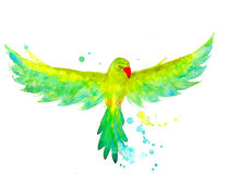 Watercolor Budgerigar in the flying Stock Photo
