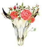 Watercolor buffalo skull Royalty Free Stock Image