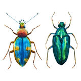 Watercolor bug beetle Stock Image
