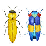Watercolor bug beetle Royalty Free Stock Photography
