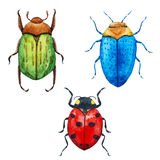 Watercolor bug beetle Royalty Free Stock Images