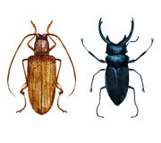 Watercolor bug beetle Stock Photos