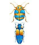 Watercolor bug beetle Stock Images