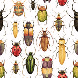 Watercolor bug beetle pattern Royalty Free Stock Photos