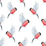 Watercolor bullfinch bird pattern Stock Photography