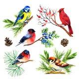 Watercolor bullfinch, titmouse, καρδινάλιος και σπουργίτι στους κλάδους Στοκ φωτογραφία με δικαίωμα ελεύθερης χρήσης