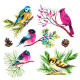 Watercolor bullfinch, titmouse, cardinal and sparrow on branches Stock Photo