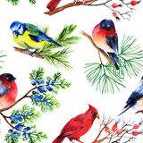 Watercolor bullfinch, titmouse, cardinal and sparrow on branches. Watercolor seamless pattern with bullfinch, titmouse, cardinal and sparrow on branches. Hand Stock Photos
