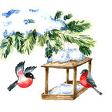 Watercolor Bullfinch on white. Drawing of a bird with winter branch and nesting box.. Christmas symbol. Vintage style.Vector Stock Image
