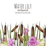 Watercolor bulrush and pink lotus background, greeting card template, artistic design background. Hand painted on a white background Stock Photo