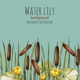 Watercolor bulrush and yellow water lily background, greeting card template. Artistic design background, hand painted on a blue background Royalty Free Stock Photos