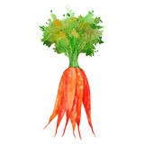 Watercolor bunch of carrots Royalty Free Stock Photo