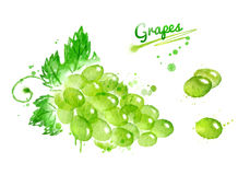Watercolor bunch of grapes Stock Photos