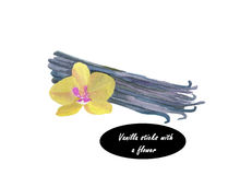 Watercolor bunch of vanilla sticks and orchid flower Stock Photos