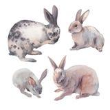 Watercolor bunnies graphic