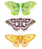 Watercolor butterflies Royalty Free Stock Photography