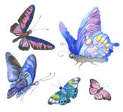 Watercolor butterflies illustration Royalty Free Stock Photo