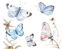 Watercolor butterflies illustration Stock Photography