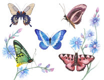 Watercolor butterflies illustration Stock Image