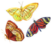 Watercolor butterflies isolated on white background. Watercolor butterflies set isolated on white background. Hand painted illustration Stock Image