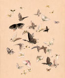 Watercolor butterflies and moths Royalty Free Stock Images