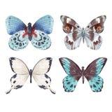 Watercolor butterflies set Stock Photos